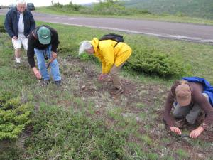 Stewards and volunteers work together to maintain the Klipfel Nature Sanctuary. Photo via MNA archives.