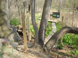Part of the boardwalk at the Red Cedar River Plant Preserve Sanctuary. Photo via MNA archives.