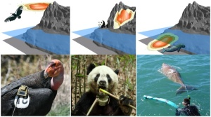 3-D images captured with help from a panda, California condor pair and a dugong,.
